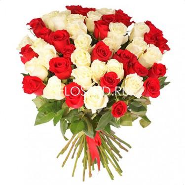 51 красная и белая роза